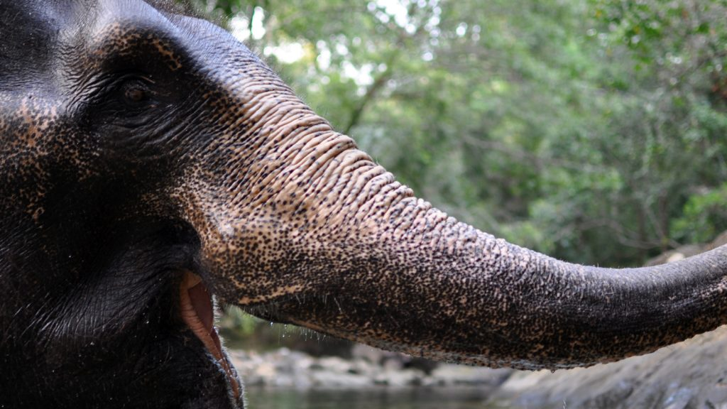 Enjoy an elephant trek on the island